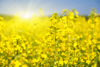 What is hay fever (and how to relieve your red, itchy eyes in spring)?